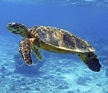 Kilpikonnasaari