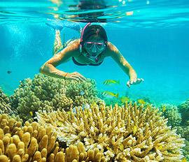 Snorklausretki Phi Phi