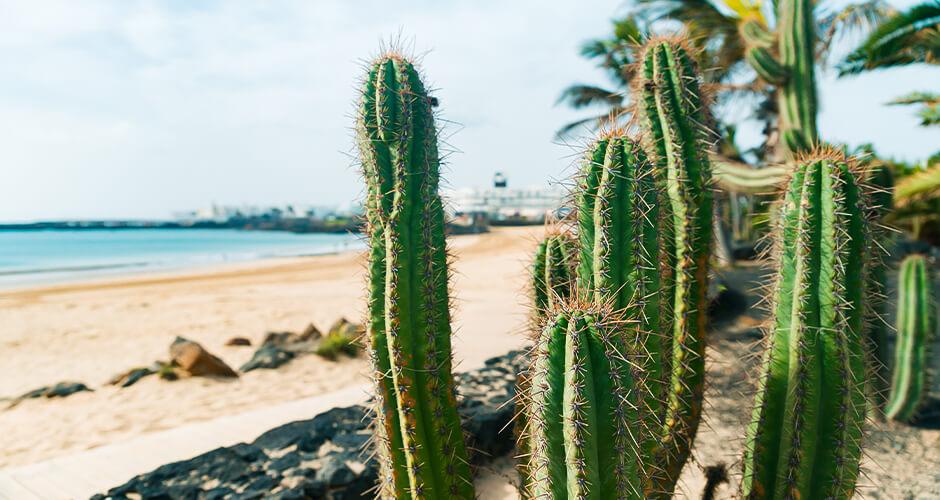 Costa Teguise, Lanzarote 6