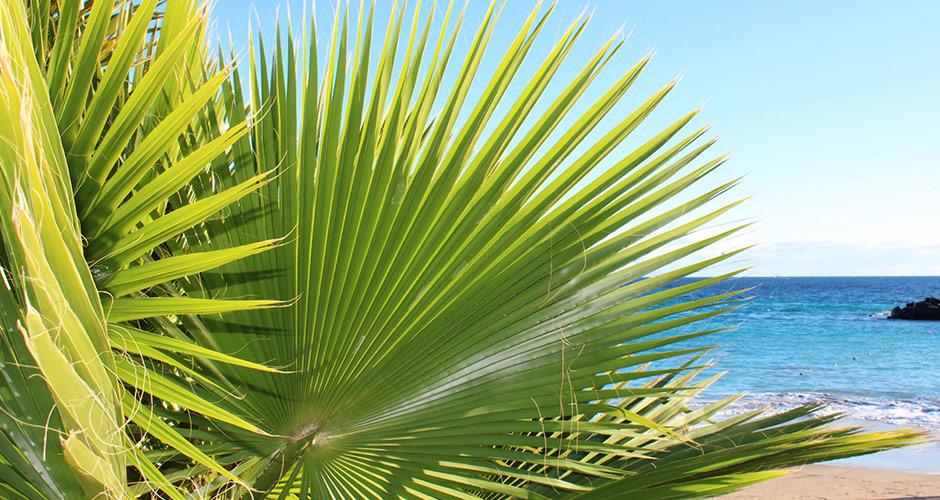 Costa Adeje, Teneriffa 4