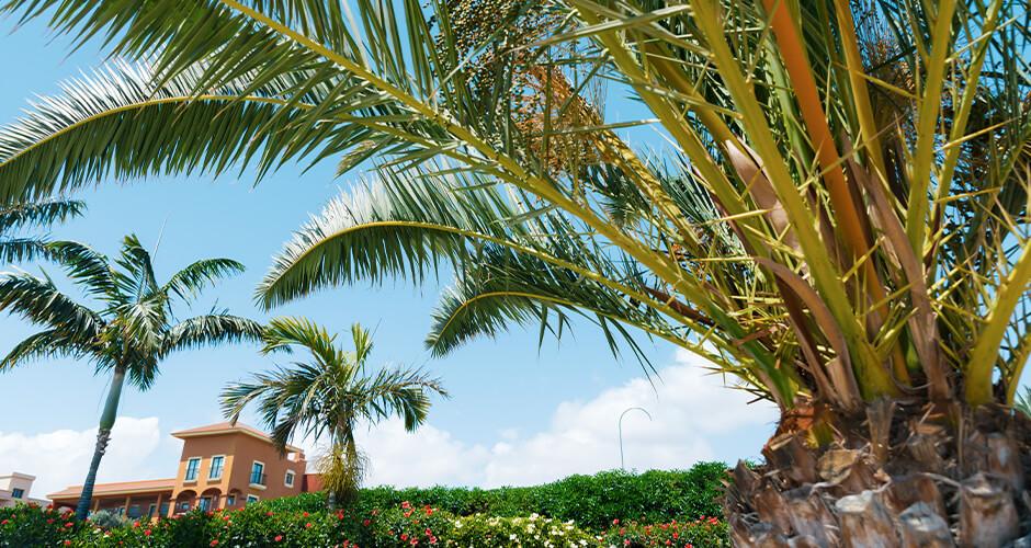Caleta de Fuste, Fuerteventura 4
