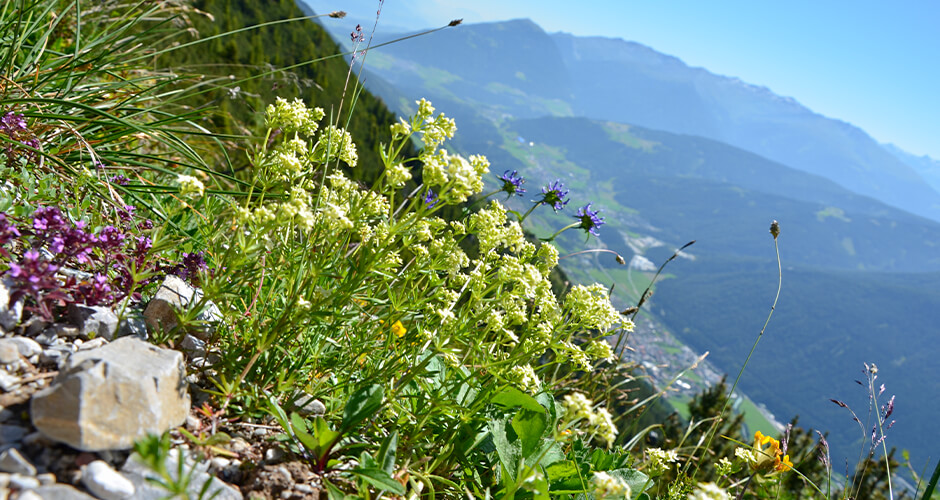 Innsbruck 20