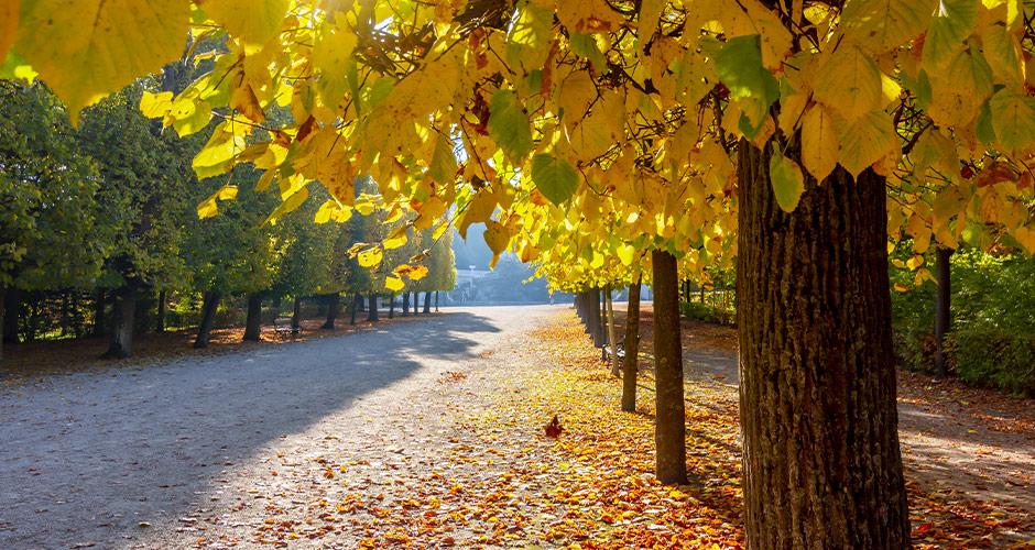 Wien, Lento+hotelli 26