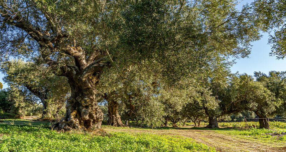 Zakinthos 23 - Navagion rannalle pääsee veneellä.